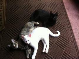 A stack of kittuhs!!!!
