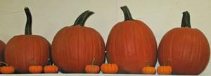 Pumpkins on a Shelf