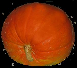 Big Pumpkin by WDWParksGal-Stock