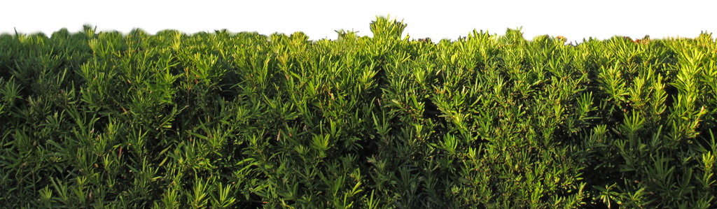 Fence png transparent images png all - The Hedge By Wdwparksgal Stock On Deviantart