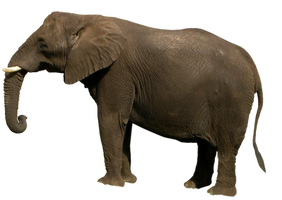 Elephant PNG by WDWParksGal-Stock