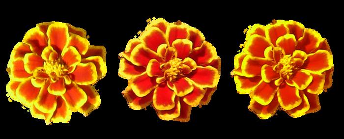 Marigold Flower Tube
