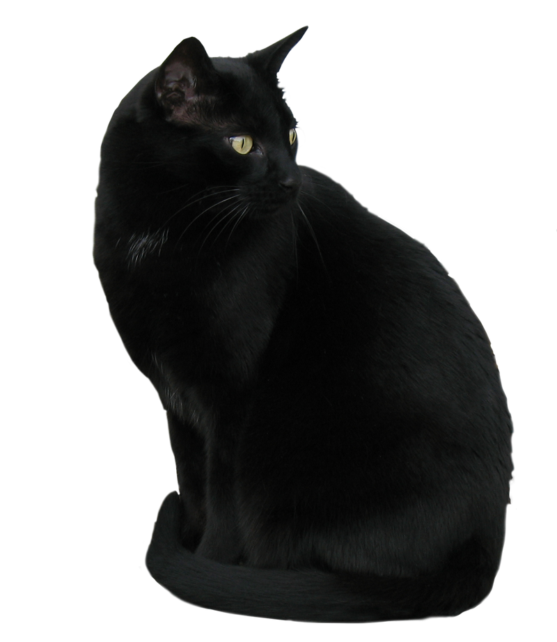 Storm ~ my black kitty! by WDWParksGal-Stock