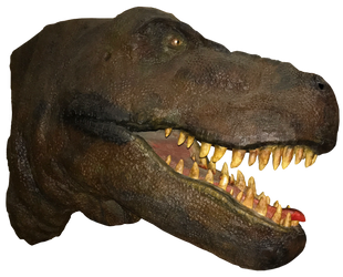 T-Rex Head IMG 1914 by WDWParksGal-Stock