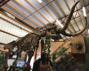 39 Jurassic Journey Exhibit IMG_1940 by WDWParksGal-Stock