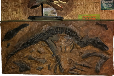 45 Jurassic Journey Exhibit IMG 1957 by WDWParksGal-Stock