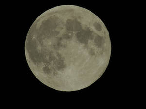 BonzaiRen Donation Moon Sept 8 2014 by WDWParksGal-Stock