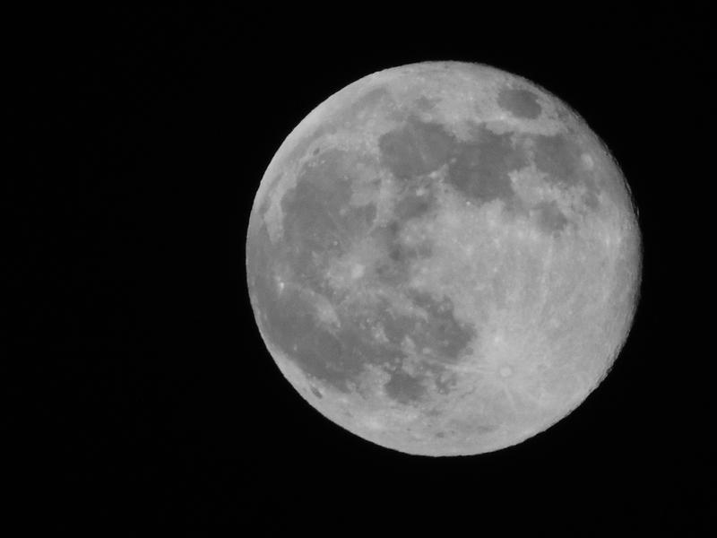 BonzaiRen Donation Moon June 23 2013B by WDWParksGal-Stock