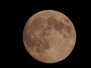 BonzaiRen Donation Moon Aug 9 2014 by WDWParksGal-Stock