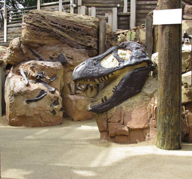 Dino Skull and Bones IMG 1582 by WDWParksGal-Stock
