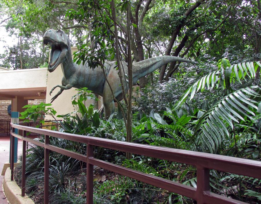 Dinosaur IMG 1622