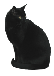 Black Cat Stock 3 by WDWParksGal-Stock