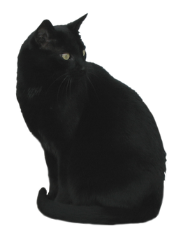 Black Cat Stock 3