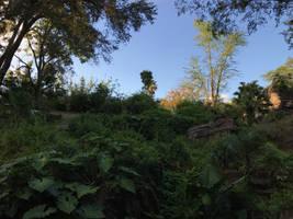 A Lush Landscape IMG 5177
