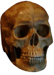 Skull Background Removed by WDWParksGal-Stock