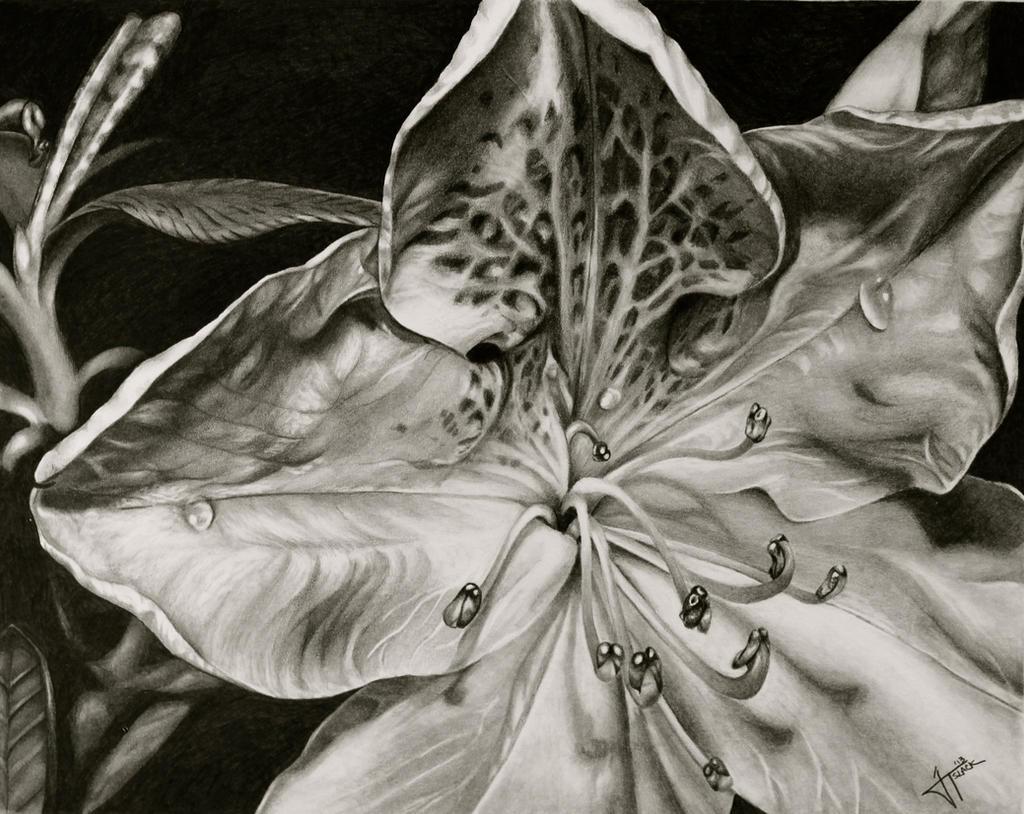 Azalea by jslackfineart