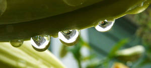Droplets within droplets