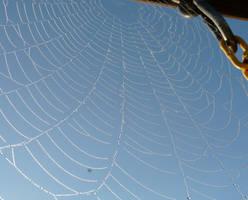 Dewy web.... by duggiehoo