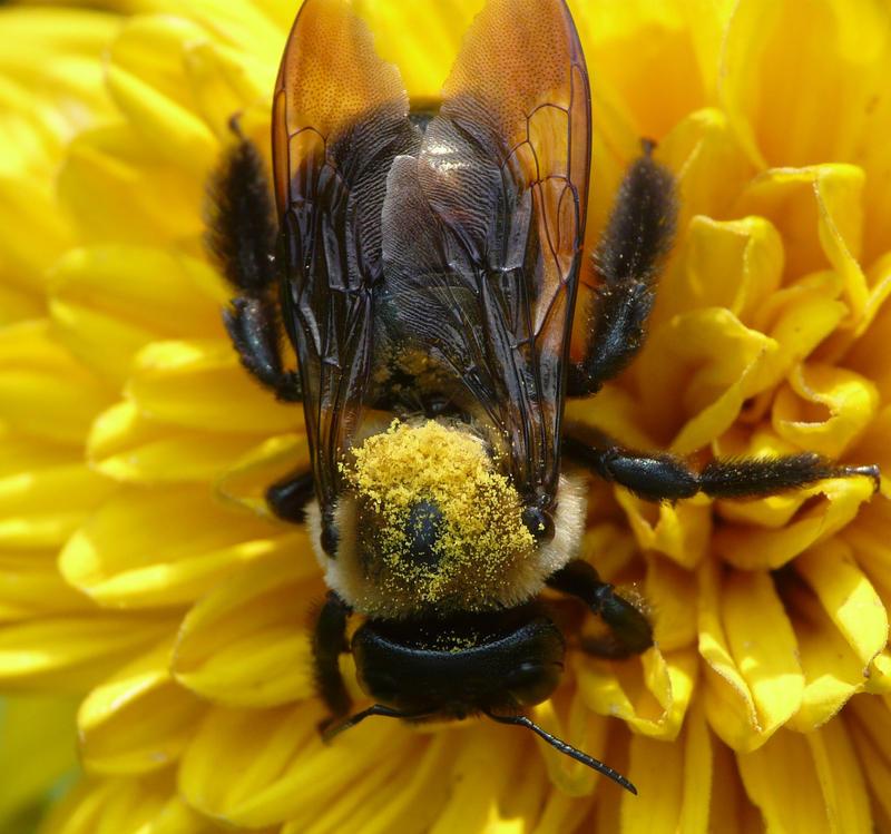 Pollen fake hair by duggiehoo