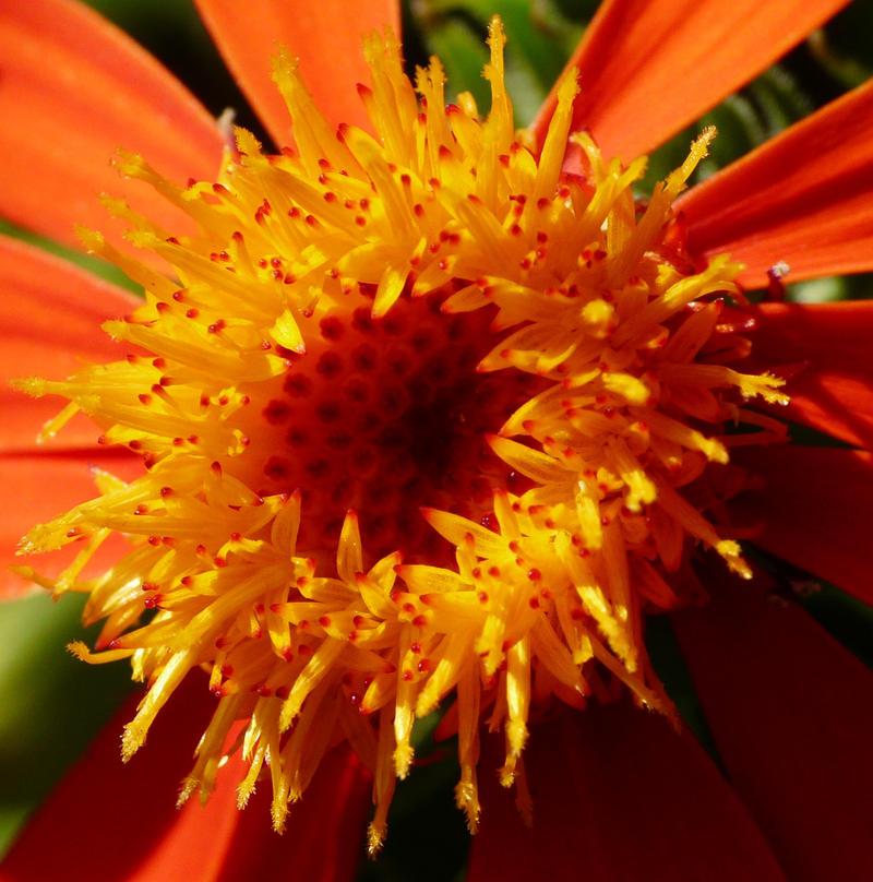Orange Fuego_by_duggiehoo