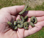 ..Handful of Monarch cats