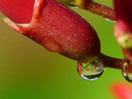 ....Droplet..,refraction by duggiehoo