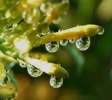 It rained last night by duggiehoo