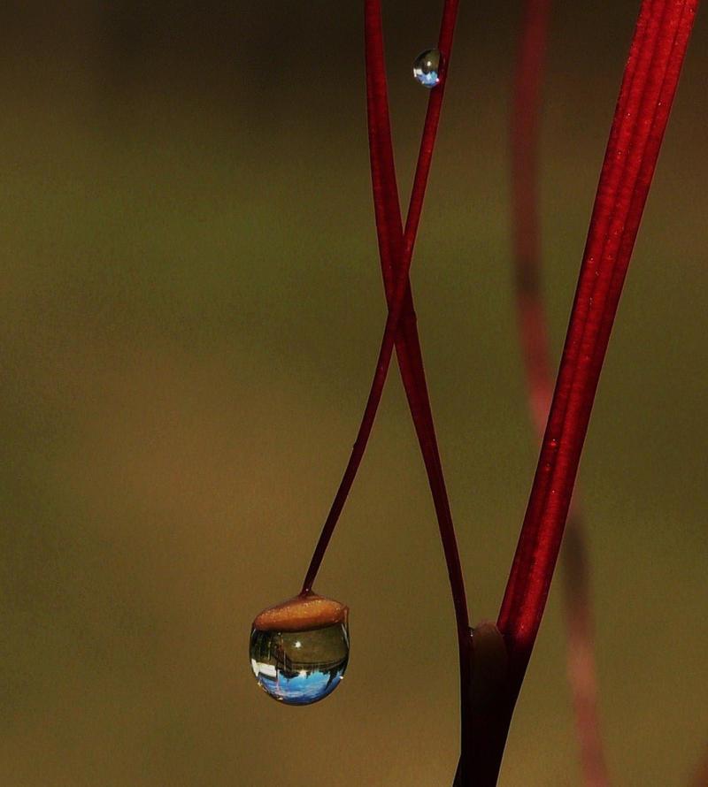 Gotas de nuevo by duggiehoo