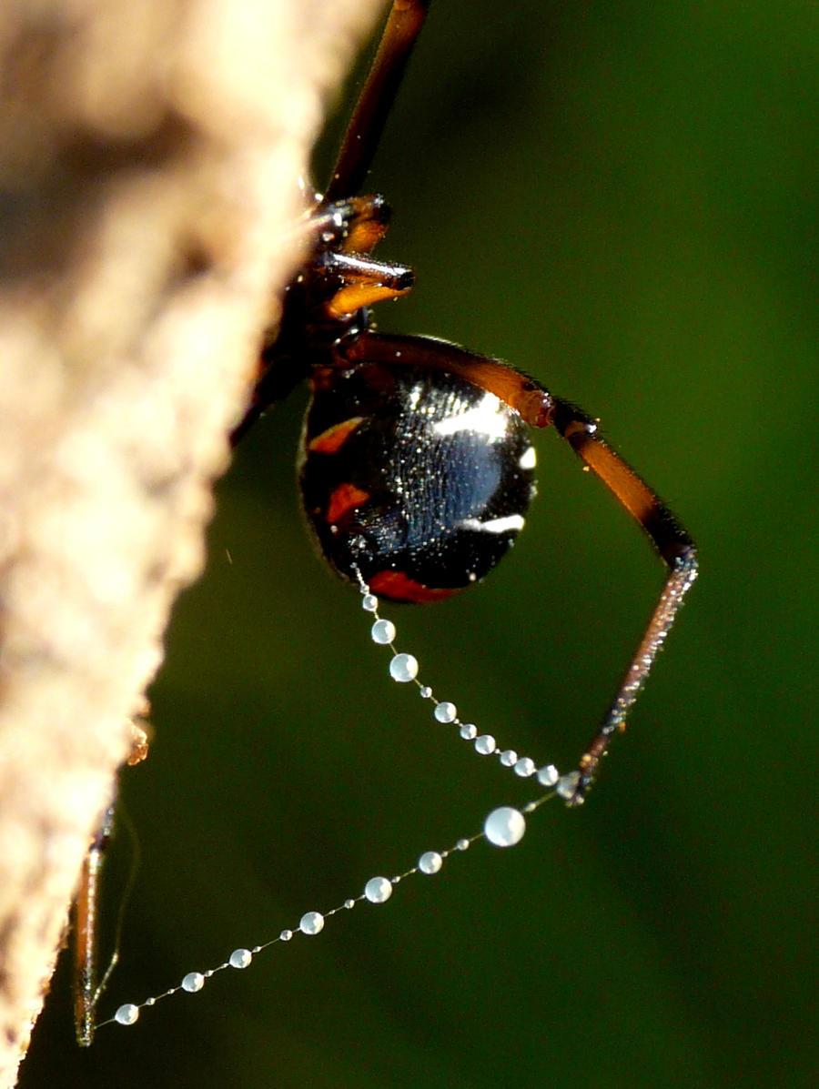 Bead web ..... by duggiehoo
