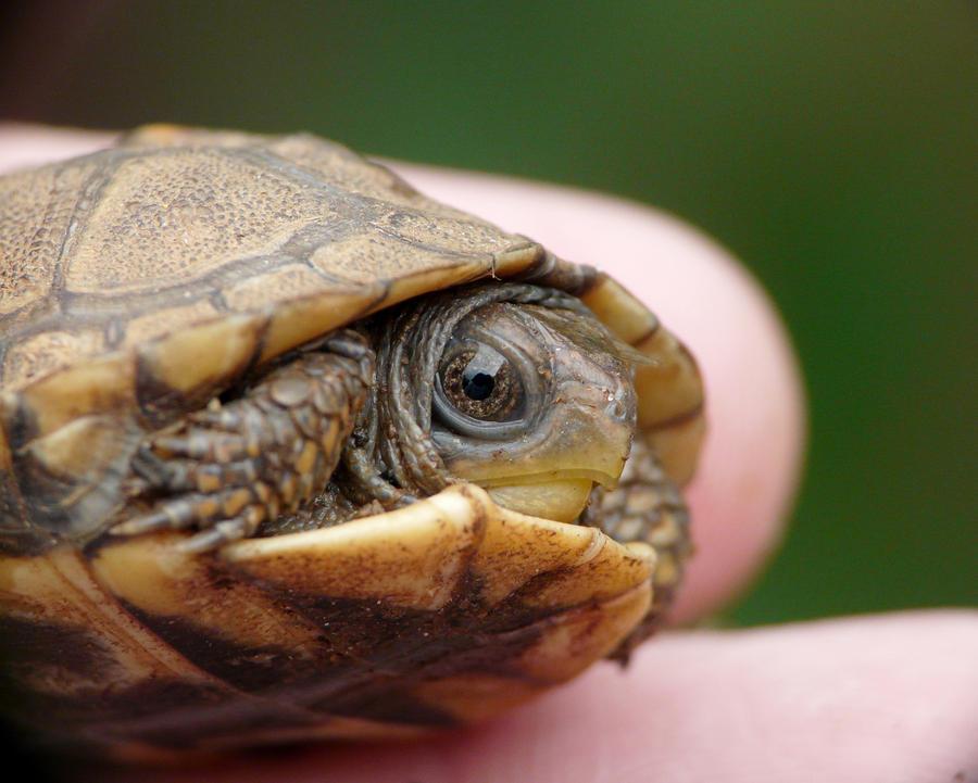 Baby Turtle, face by duggiehoo