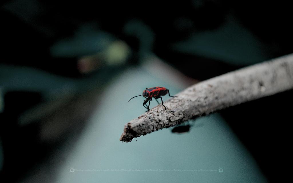 FireBug by Mattev