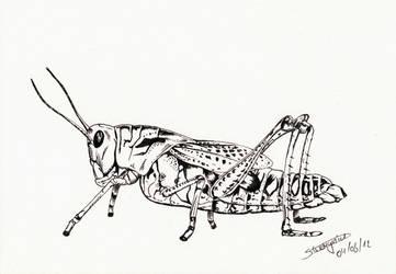 Grasshopper by Warr3