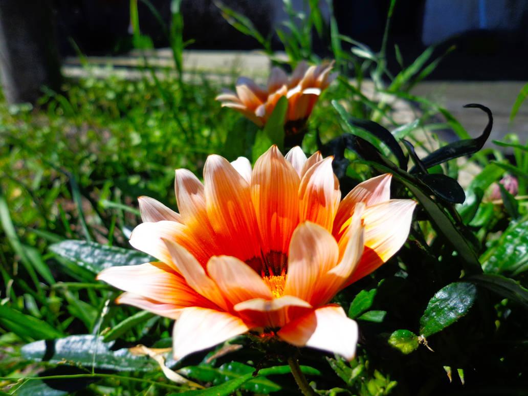 Lindas Flores Nice Flowers By Joelxconde On Deviantart