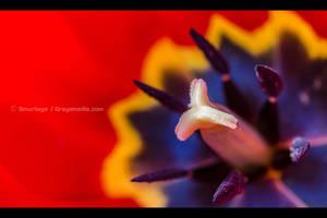 Crimson Flourish by Smurfage