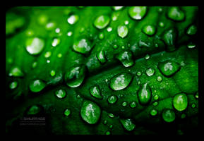 Fifty Shades of Green by Smurfage