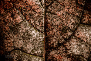 Granite Hands by Smurfage