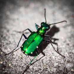 Emerald Flight