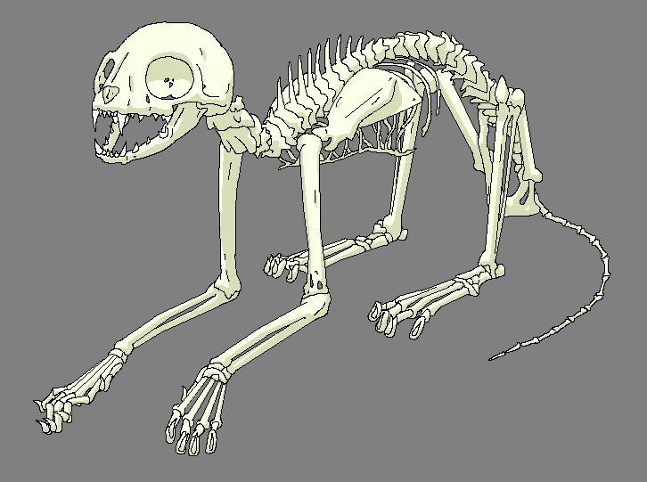 Cat Skeleton by Arborix on DeviantArt