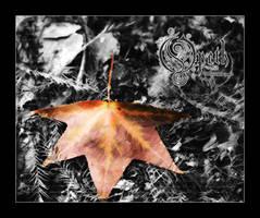 tSN Opeth by OpethFans