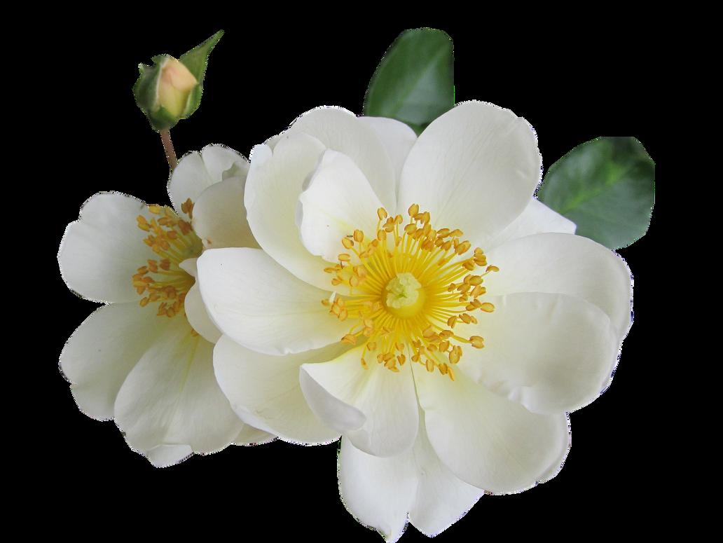 Flower-2414732 1920