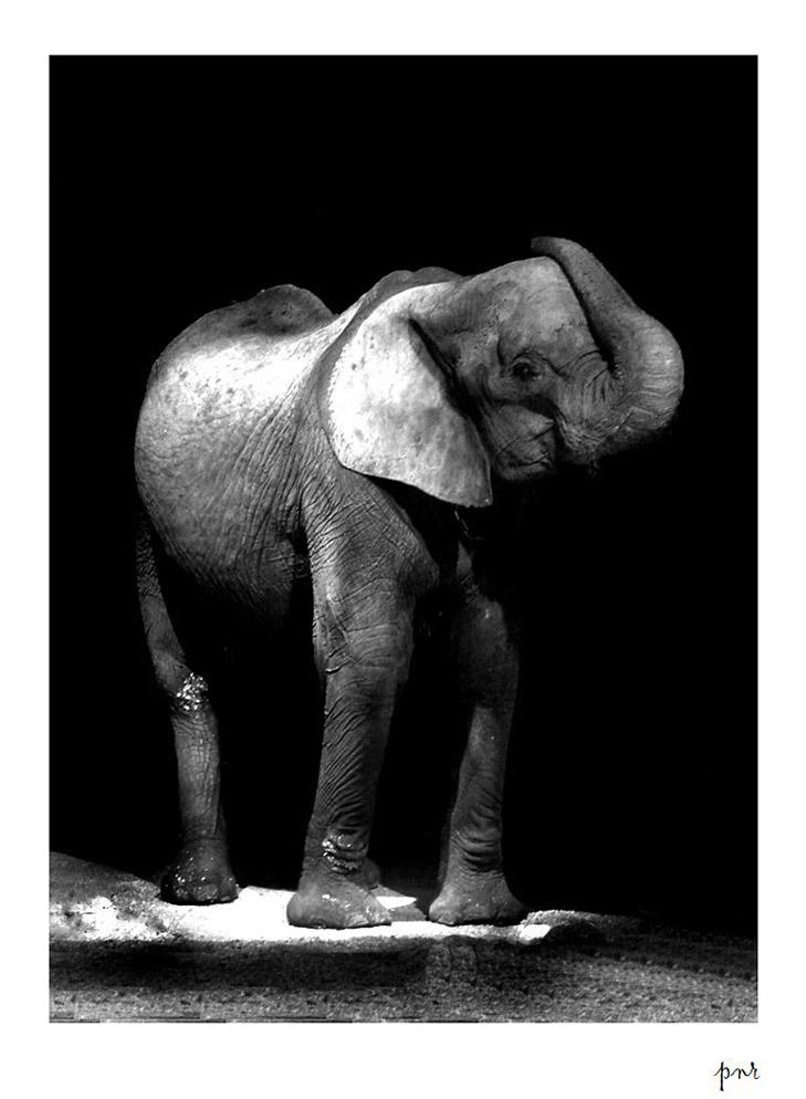 elephant by kalihora