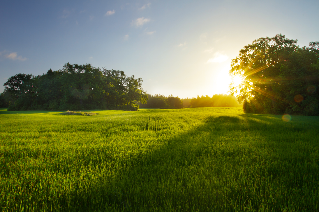 The morning meadow by sanctus87 on deviantart for The meado