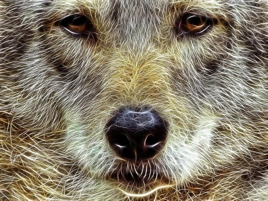 Coyote: Fractalius Re-Edit by nerdboy69