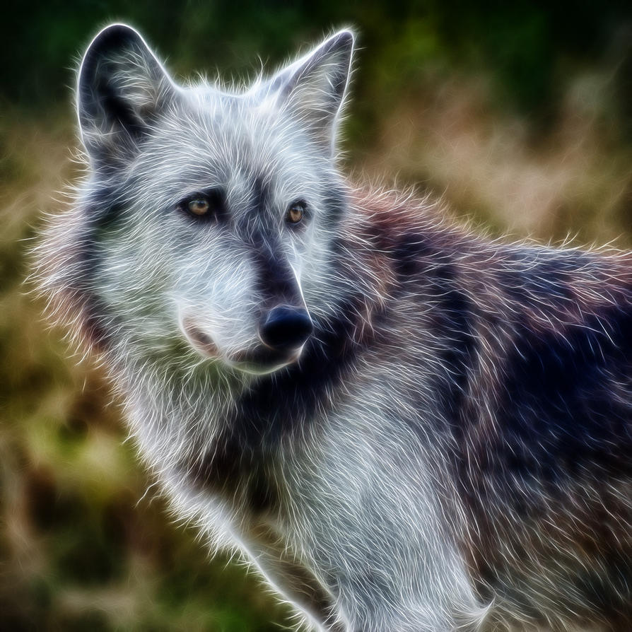 Wolf: Fractalius Re-Edit (Ver. 2) by nerdboy69