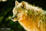 Wolf: Fractalius Re-Edit (Ver.5)