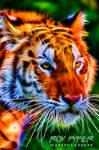 Siberian Tigress: Fractalius Re-Edit