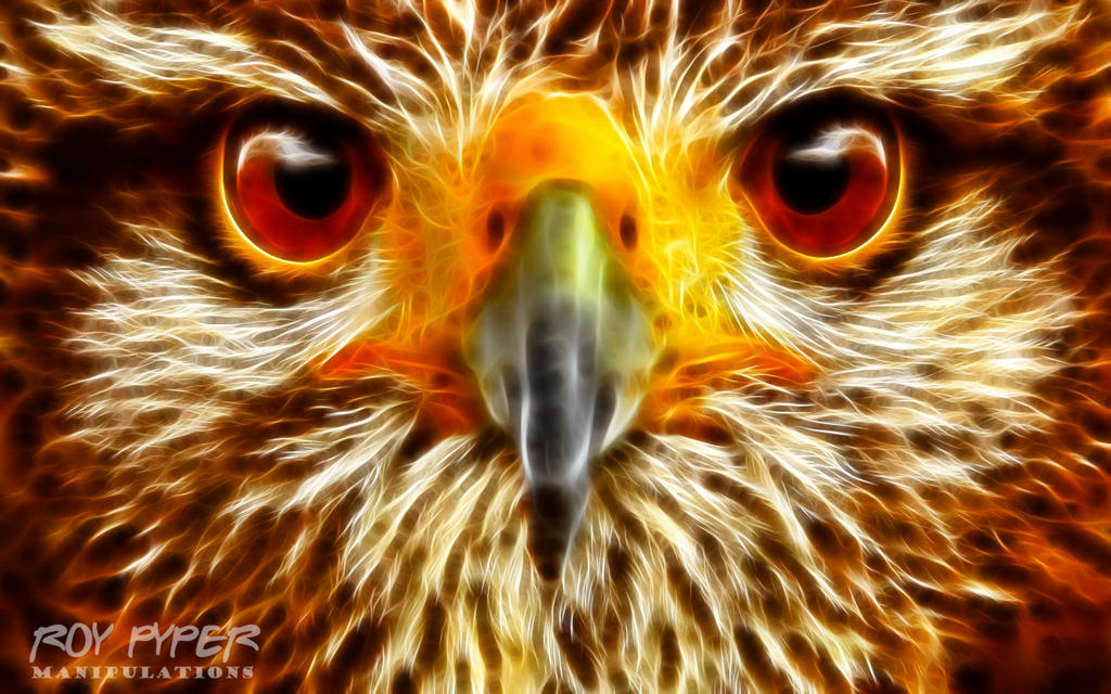 Owl: Fractalius Re-Edit by nerdboy69