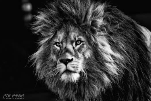 Lion: Monochrome Oil Paint Edit by nerdboy69