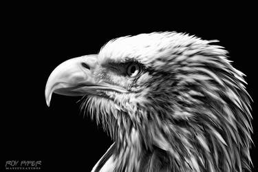 Eagle: Monochrome Oil Paint Edit by nerdboy69