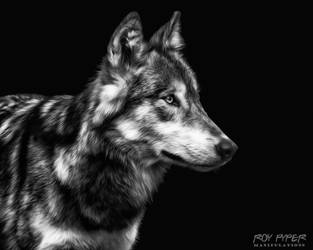 Wolf: Monochrome Oil Paint Edit by nerdboy69